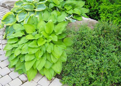 Plants_44