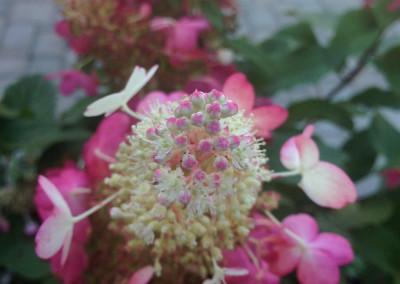 Plants_57