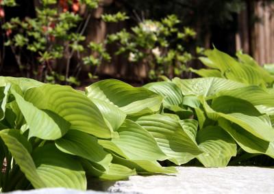 Plants_58